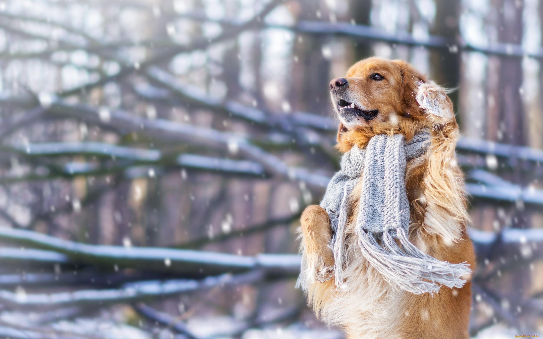 Собака в снегу картинки